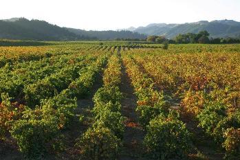 Dry Creek Valley History Of Vineyards